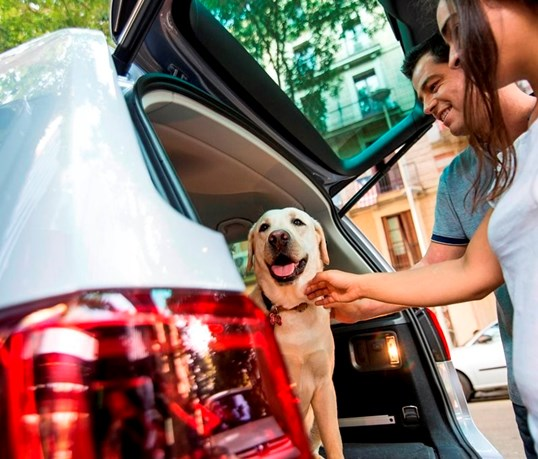 As melhores dicas para ir de férias e levar o seu cão... em segurança!